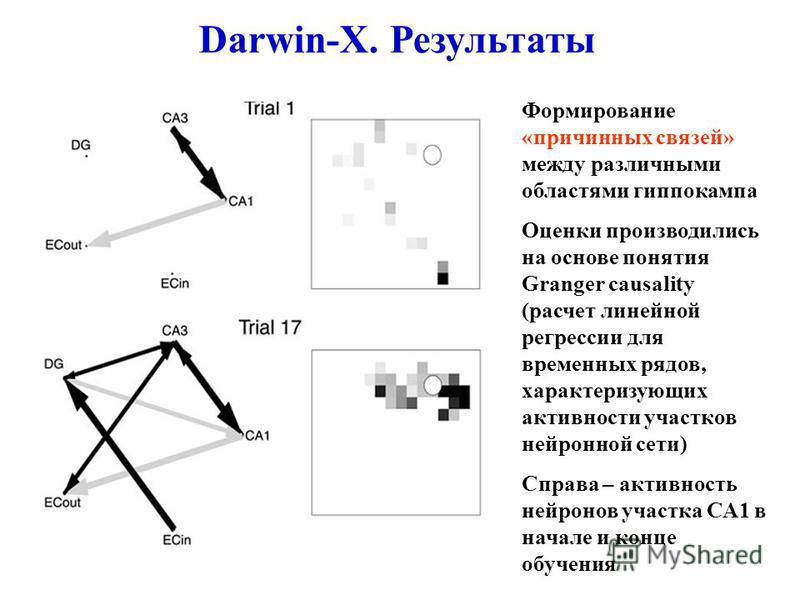 Формирование «причинных связей» между различными областями гиппокампа Оценки производились на основе понятия Granger causality (расчет линейной регрессии для временных рядов, характеризующих активности участков нейронной сети) Справа – активность ней