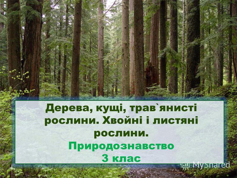 Дерева, кущі, трав`янисті рослини. Хвойні і листяні рослини. Природознавство 3 клас