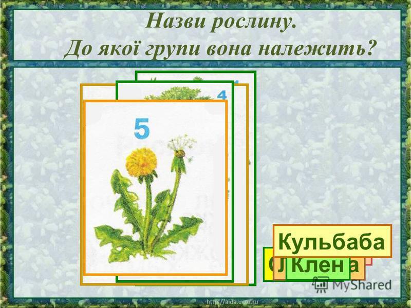 Назви рослину. До якої групи вона належить? Сосна Калина ЛіщинаКлен Кульбаба