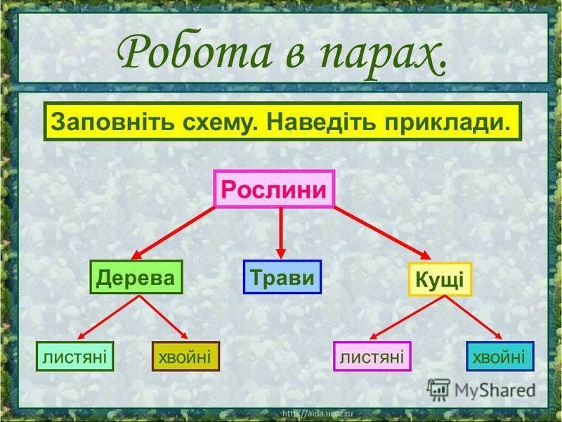 Робота в парах. Рослини Кущі ДереваТрави хвойнілистяні хвойні Заповніть схему. Наведіть приклади.