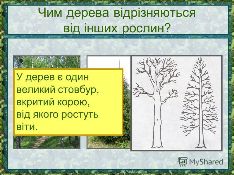 Чим дерева відрізняються від інших рослин? У дерев є один великий стовбур, вкритий корою, від якого ростуть віти.