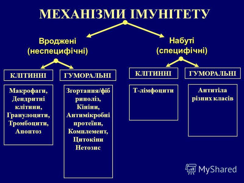 МЕХАНІЗМИ ІМУНІТЕТУ Набуті(специфічні) Вроджені(неспецифічні) КЛІТИННІГУМОРАЛЬНІ КЛІТИННІГУМОРАЛЬНІ Макрофаги, Дендритні клітини, Гранулоцити, Тромбоцити, Апоптоз Згортання/фіб риноліз, Кініни, Антимікробні протеїни, Комплемент, Цитокіни Нетозис Т-лі