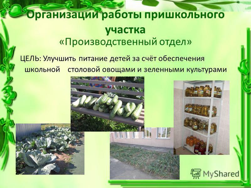 Организации работы пришкольного участка «Производственный отдел» ЦЕЛЬ: Улучшить питание детей за счёт обеспечения школьной столовой овощами и зеленными культурами