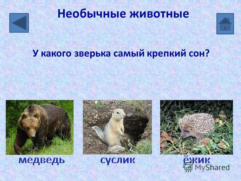 Необычные животные У какого зверька самый крепкий сон?
