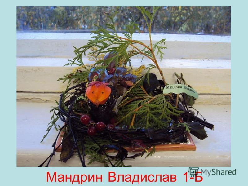Мандрин Владислав 1-Б