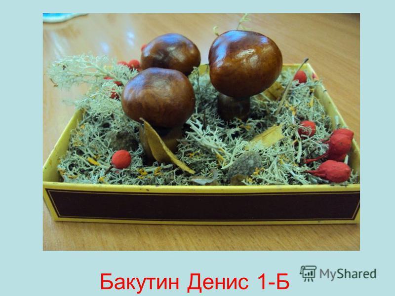 Бакутин Денис 1-Б