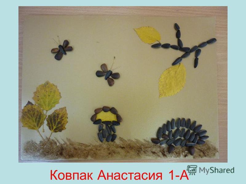 Ковпак Анастасия 1-А