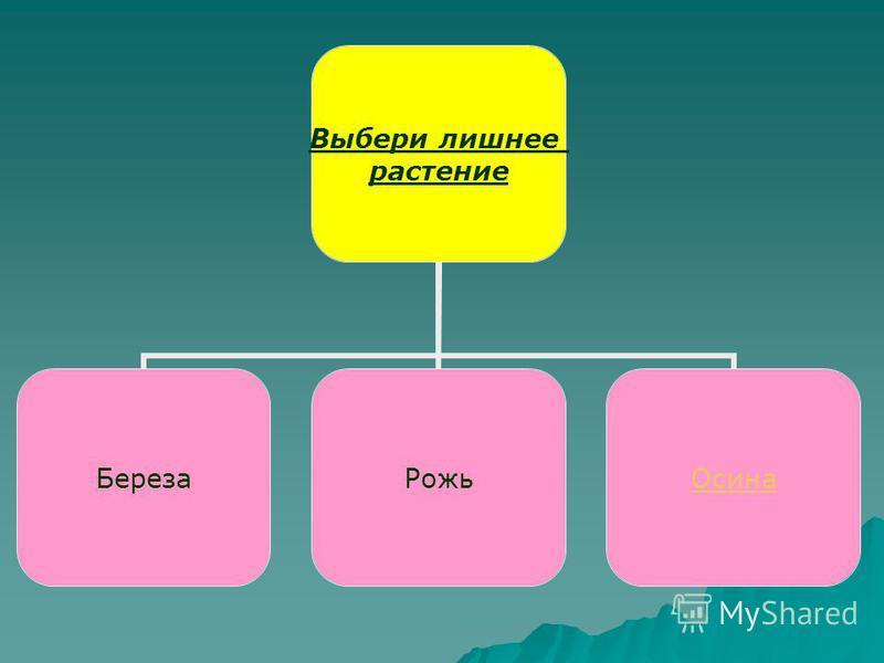 Выбери лишнее растение Береза РожьОсина