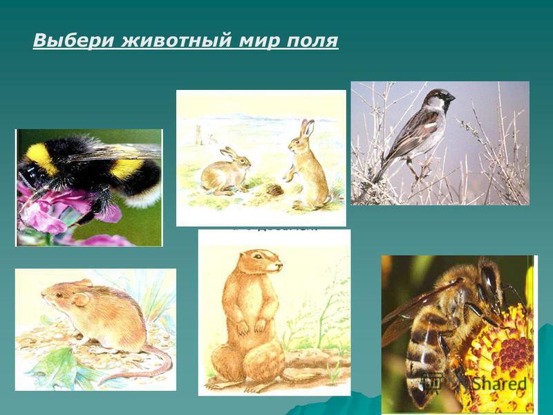 Выбери животный мир поля