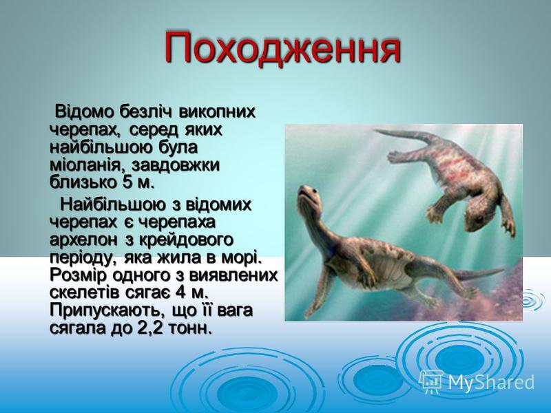 Відомо безліч викопних черепах, серед яких найбільшою була міоланія, завдовжки близько 5 м. Відомо безліч викопних черепах, серед яких найбільшою була міоланія, завдовжки близько 5 м. Найбільшою з відомих черепах є черепаха архелон з крейдового періо