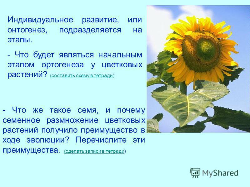 Индивидуальное развитие, или онтогенез, подразделяется на этапы. - Что будет являться начальным этапом ортогенеза у цветковых растений? (составить схему в тетради) (составить схему в тетради) - Что же такое семя, и почему семенное размножение цветков