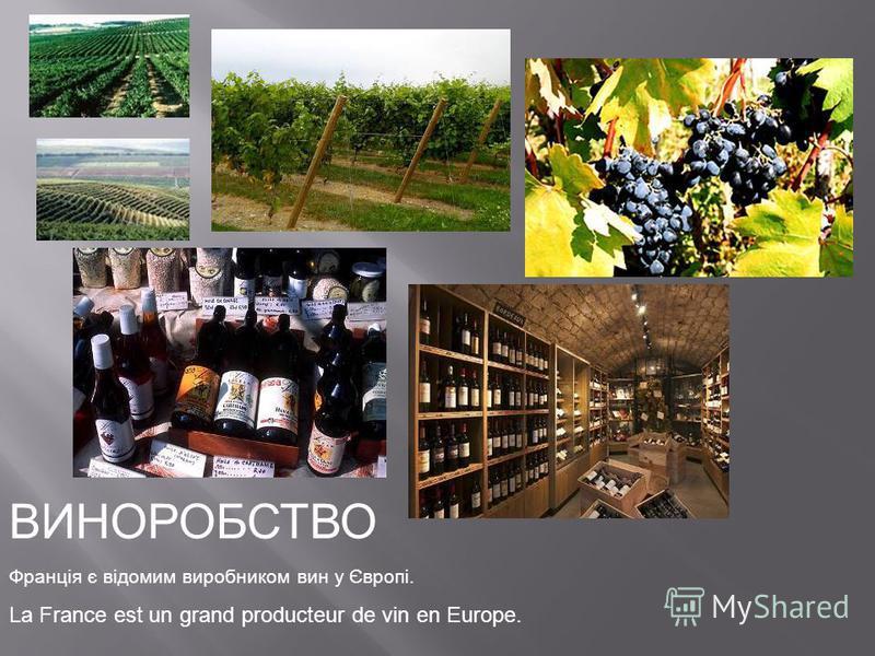 ВИНОРОБСТВО Франція є відомим виробником вин у Європі. La France est un grand producteur de vin en Europe.