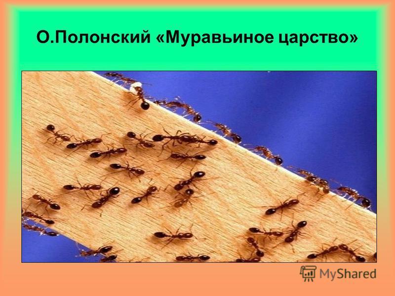 О.Полонский «Муравьиное царство»