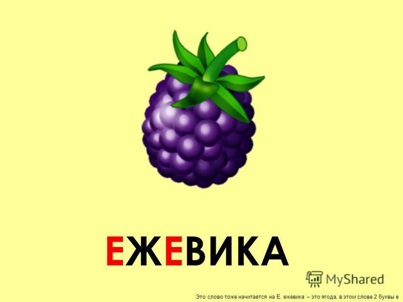 ЕЖЕВИКА Это слово тоже начитается на Е. ежевика – это ягода, в этом слове 2 буквы е