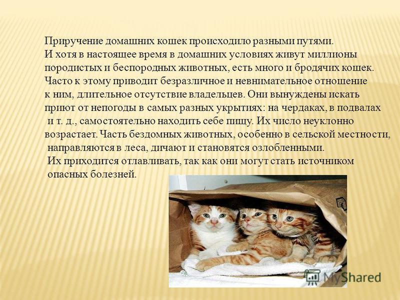 Приручение домашних кошек происходило разными путями. И хотя в настоящее время в домашних условиях живут миллионы породистых и беспородных животных, есть много и бродячих кошек. Часто к этому приводит безразличное и невнимательное отношение к ним, дл