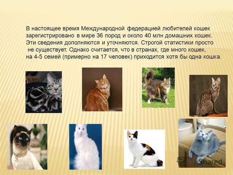 В настоящее время Международной федерацией любителей кошек зарегистрировано в мире 36 пород и около 40 млн домашних кошек. Эти сведения дополняются и уточняются. Строгой статистики просто не существует. Однако считается, что в странах, где много коше