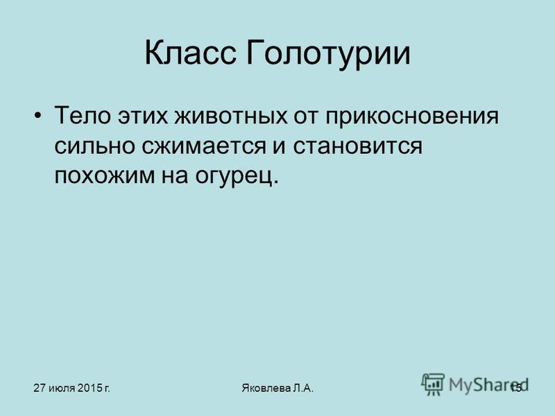 27 июля 2015 г.Яковлева Л.А.15 Класс Голотурии Тело этих животных от прикосновения сильно сжимается и становится похожим на огурец.