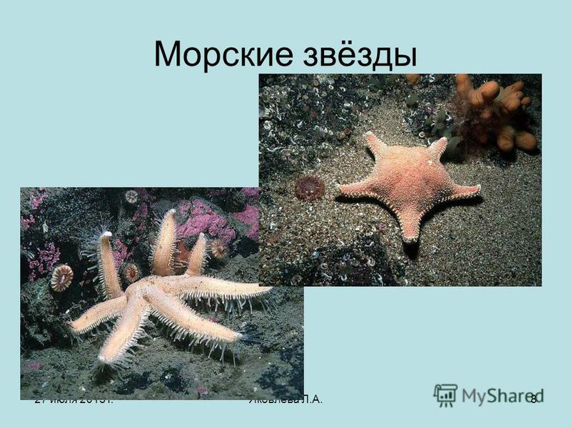 27 июля 2015 г.Яковлева Л.А.8 Морские звёзды