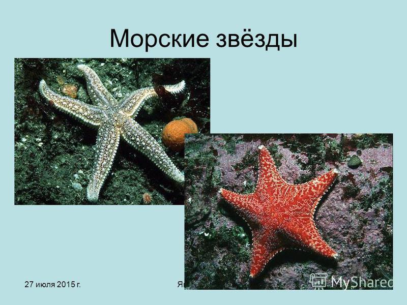 27 июля 2015 г.Яковлева Л.А.9 Морские звёзды