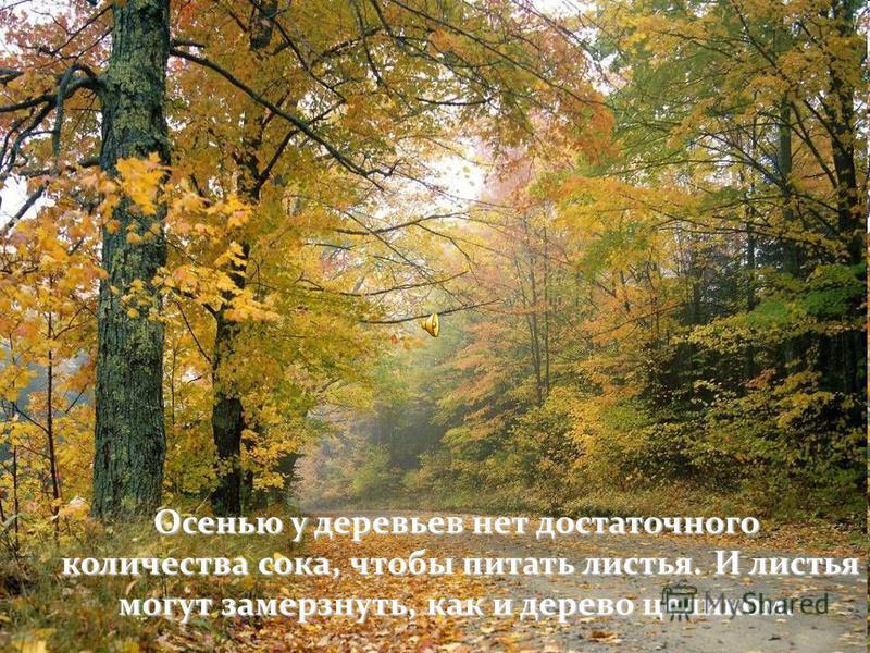 Осень. В листьях происходят удивительные превращения. удивительные превращения.