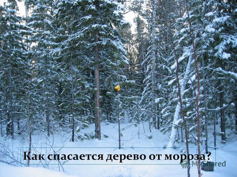 План 12 34 лес
