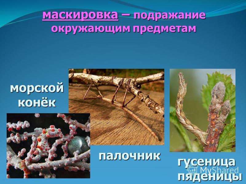 маскировка – подражание окружающим предметам палочник гусеница пяденицы морской конёк
