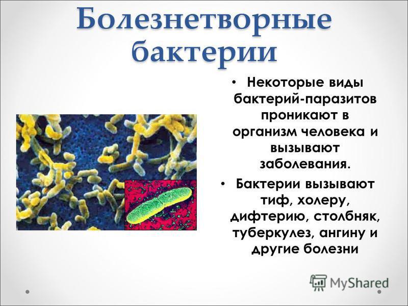 Болезнетворные бактерии Некоторые виды бактерий-паразитов проникают в организм человека и вызывают заболевания. Бактерии вызывают тиф, холеру, дифтерию, столбняк, туберкулез, ангину и другие болезни