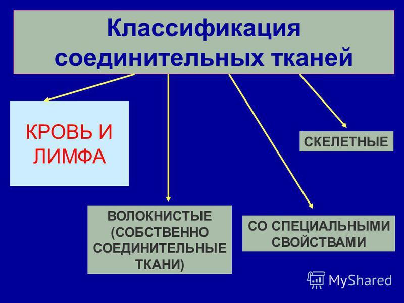 Классификация соединительных тканей КРОВЬ И ЛИМФА ВОЛОКНИСТЫЕ (СОБСТВЕННО СОЕДИНИТЕЛЬНЫЕ ТКАНИ) СО СПЕЦИАЛЬНЫМИ СВОЙСТВАМИ СКЕЛЕТНЫЕ