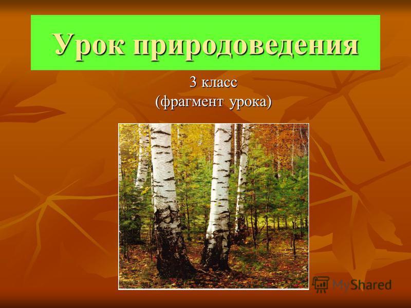 Урок природоведения 3 класс (фрагмент урока)