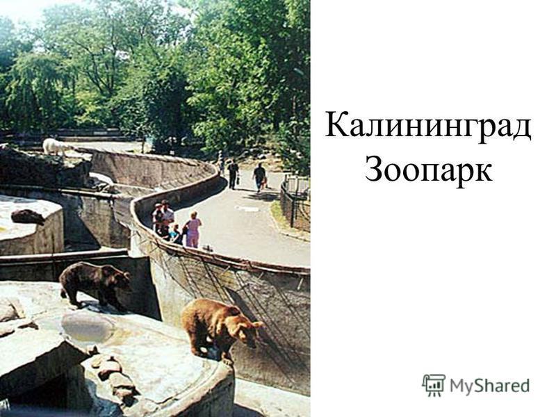 Калининград Зоопарк