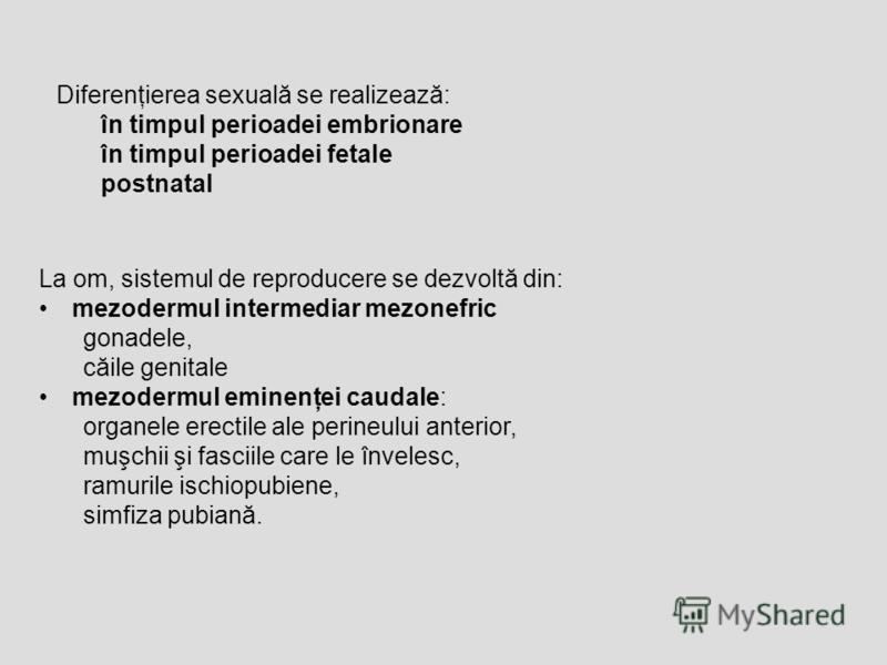 La om, sistemul de reproducere se dezvoltă din: mezodermul intermediar mezonefric gonadele, căile genitale mezodermul eminenţei caudale: organele erectile ale perineului anterior, muşchii şi fasciile care le învelesc, ramurile ischiopubiene, simfiza