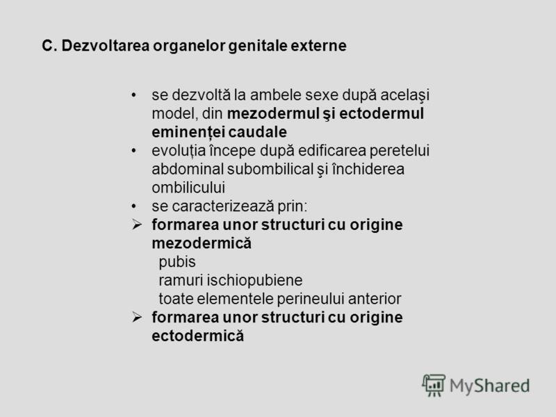 C. Dezvoltarea organelor genitale externe se dezvoltă la ambele sexe după acelaşi model, din mezodermul şi ectodermul eminenţei caudale evoluţia începe după edificarea peretelui abdominal subombilical şi închiderea ombilicului se caracterizează prin: