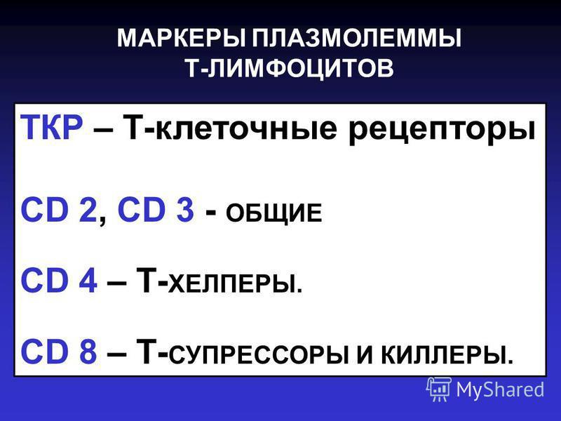 МАРКЕРЫ ПЛАЗМОЛЕММЫ Т-ЛИМФОЦИТОВ ТКР – Т-клеточные рецепторы CD 2, CD 3 - ОБЩИЕ CD 4 – Т- ХЕЛПЕРЫ. CD 8 – Т- СУПРЕССОРЫ И КИЛЛЕРЫ.