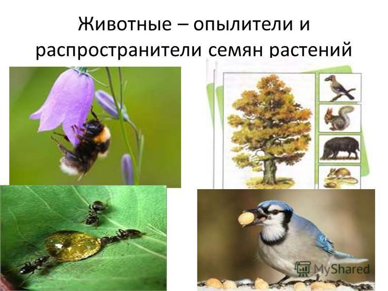 Животные – опылители и распространители семян растений