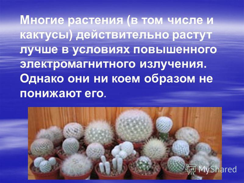 Многие растения (в том числе и кактусы) действительно растут лучше в условиях повышенного электромагнитного излучения. Однако они ни коем образом не понижают его.