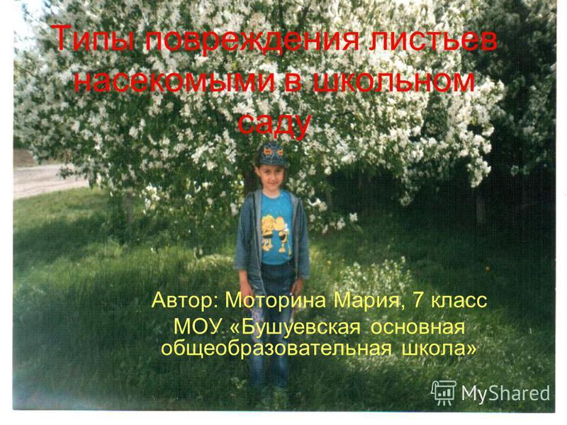 Типы повреждения листьев насекомыми в школьном саду Автор: Моторина Мария, 7 класс МОУ «Бушуевская основная общеобразовательная школа»