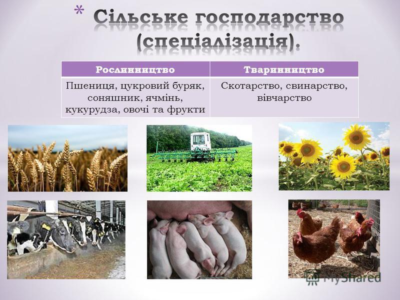 РослинництвоТваринництво Пшениця, цукровий буряк, соняшник, ячмінь, кукурудза, овочі та фрукти Скотарство, свинарство, вівчарство