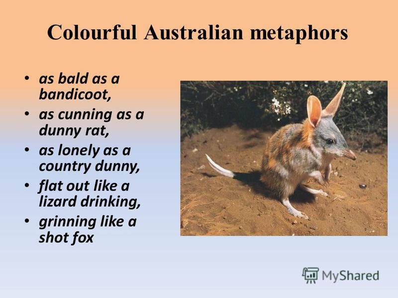 Colourful Australian metaphors as bald as a bandicoot, as cunning as a dunny rat, as lonely as a country dunny, flat out like a lizard drinking, grinning like a shot fox