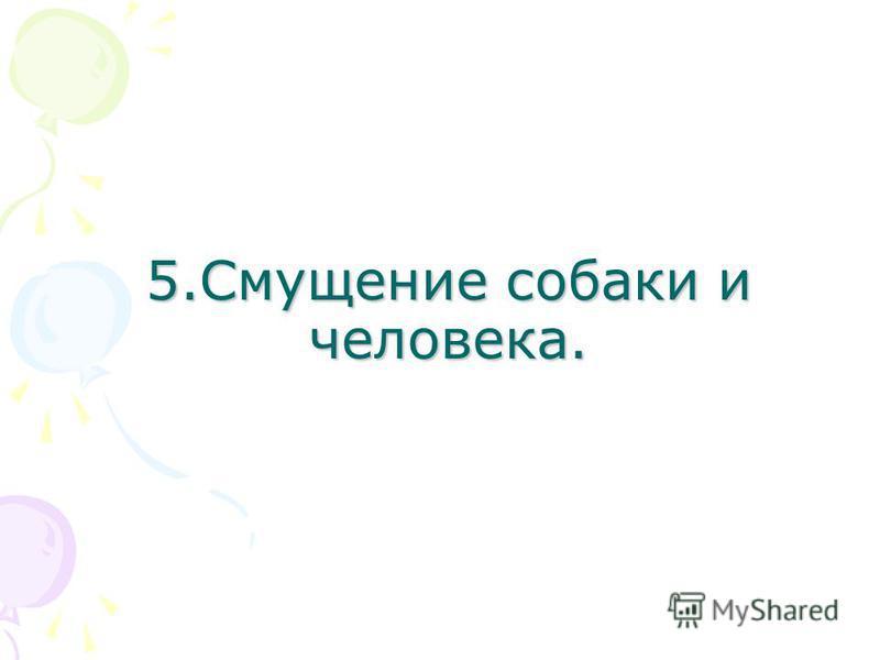 5. Смущение собаки и человека.