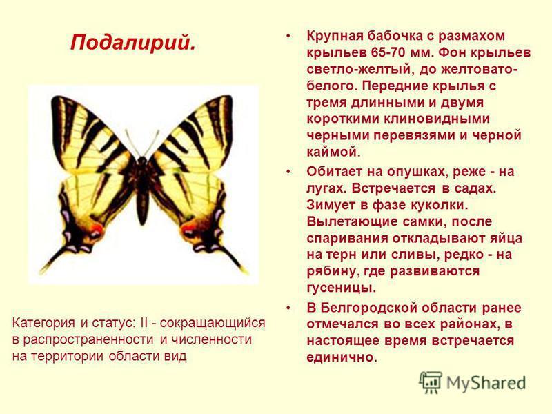 Крупная бабочка с размахом крыльев 65-70 мм. Фон крыльев светло-желтый, до желтовато- белого. Передние крылья с тремя длинными и двумя короткими клиновидными черными перевязями и черной каймой. Обитает на опушках, реже - на лугах. Встречается в садах