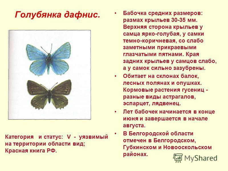 Голубянка дафнис. Бабочка средних размеров: размах крыльев 30-35 мм. Верхняя сторона крыльев у самца ярко-голубая, у самки темно-коричневая, со слабо заметными прикраевыми глазчатыми пятнами. Края задних крыльев у самцов слабо, а у самок сильно зазуб