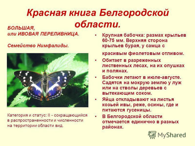 Красная книга Белгородской области. Крупная бабочка: размах крыльев 60-75 мм. Верхняя сторона крыльев бурая, у самца с красивым фиолетовым отливом. Обитает в разреженных лиственных лесах, на их опушках и полянах. Бабочки летают в июле-августе. Садятс