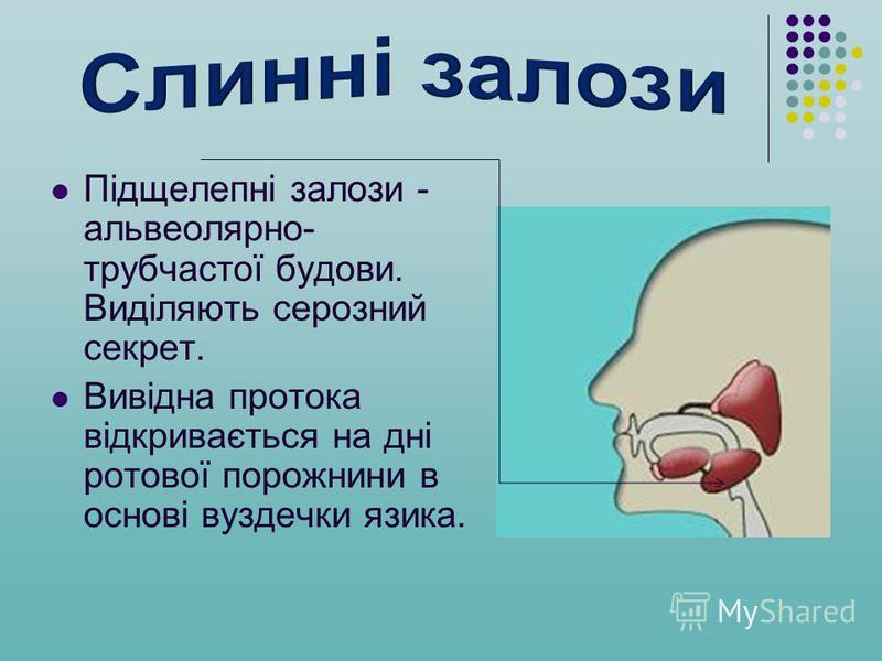 Підщелепні залози - альвеолярно- трубчастої будови. Виділяють серозний секрет. Вивідна протока відкривається на дні ротової порожнини в основі вуздечки язика.