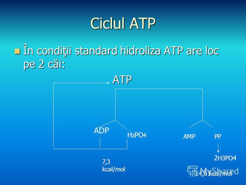 Ciclul ATP În condiţii standard hidroliza ATP are loc pe 2 căi: În condiţii standard hidroliza ATP are loc pe 2 căi:ATP ADP H 3 PO 4 AMPPP 2 H3PO4 7,3 kcal/mol 14,6 kcal/mol