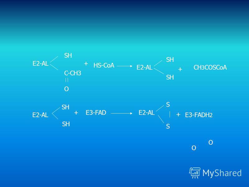 E2-AL SH C-CH3 O O O + HS-CoA E2-AL SH + CH 3 COSCoA E2-AL SH +E3-FADE2-AL S S + E3-FADH 2