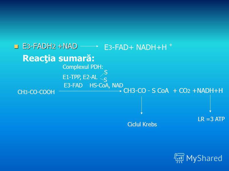 E 3 -FADH 2 +NAD E 3 -FADH 2 +NAD E 3 -FAD+ NADH+H Reacţia sumară: CH 3 -CO-COOH CH3-CO - S CoA + CO 2 +NADH+H Complexul PDH: E1-TPP, E2-AL S S E3-FAD HS-CoA, NAD Ciclul Krebs LR =3 ATP +