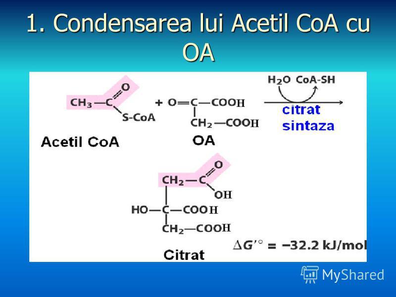 1. Condensarea lui Acetil CoA cu OA
