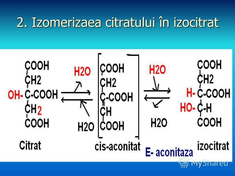 2. Izomerizaea citratului în izocitrat