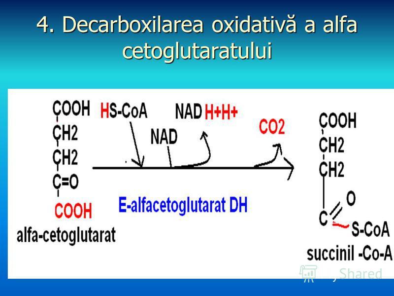 4. Decarboxilarea oxidativă a alfa cetoglutaratului