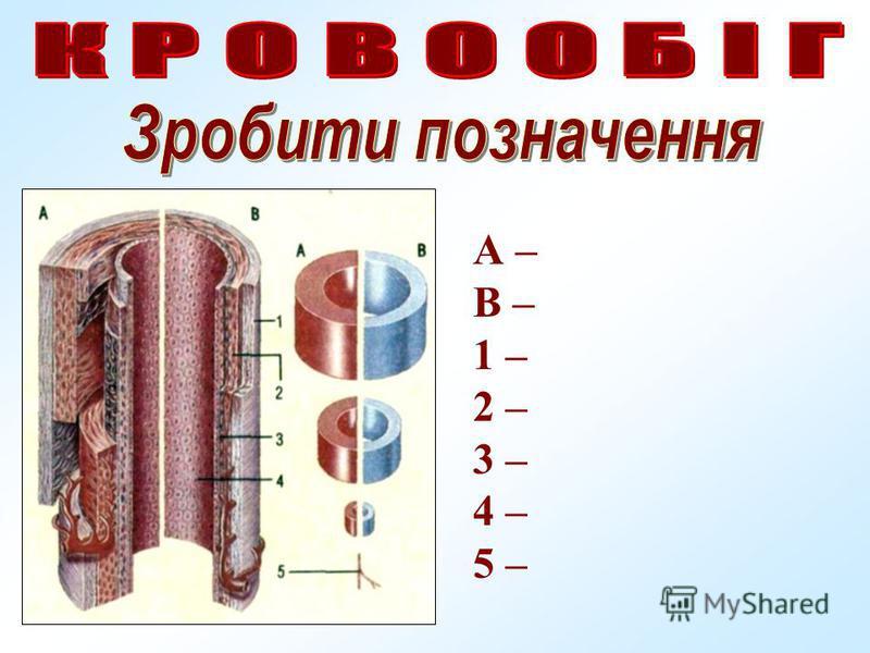А – В – 1 – 2 – 3 – 4 – 5 –